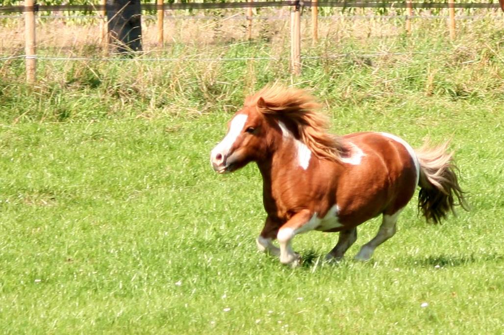 Horsetelex